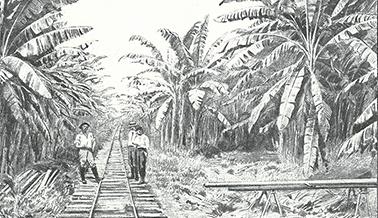 Voie ferrée bananeraie Costa Rica