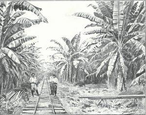 Voie ferrée à travers une plantation de bananiers au Costa-Rica. Crédits : L'Illustration, mai 1903