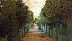 Galerie principale de l'Orangerie et ses allées d'orangers. Crédits : Châteaux de Versailles