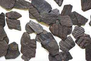Fossiles de végétaux. Crédits : Adobe Stock