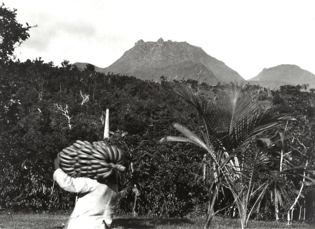 banane de Guadeloupe