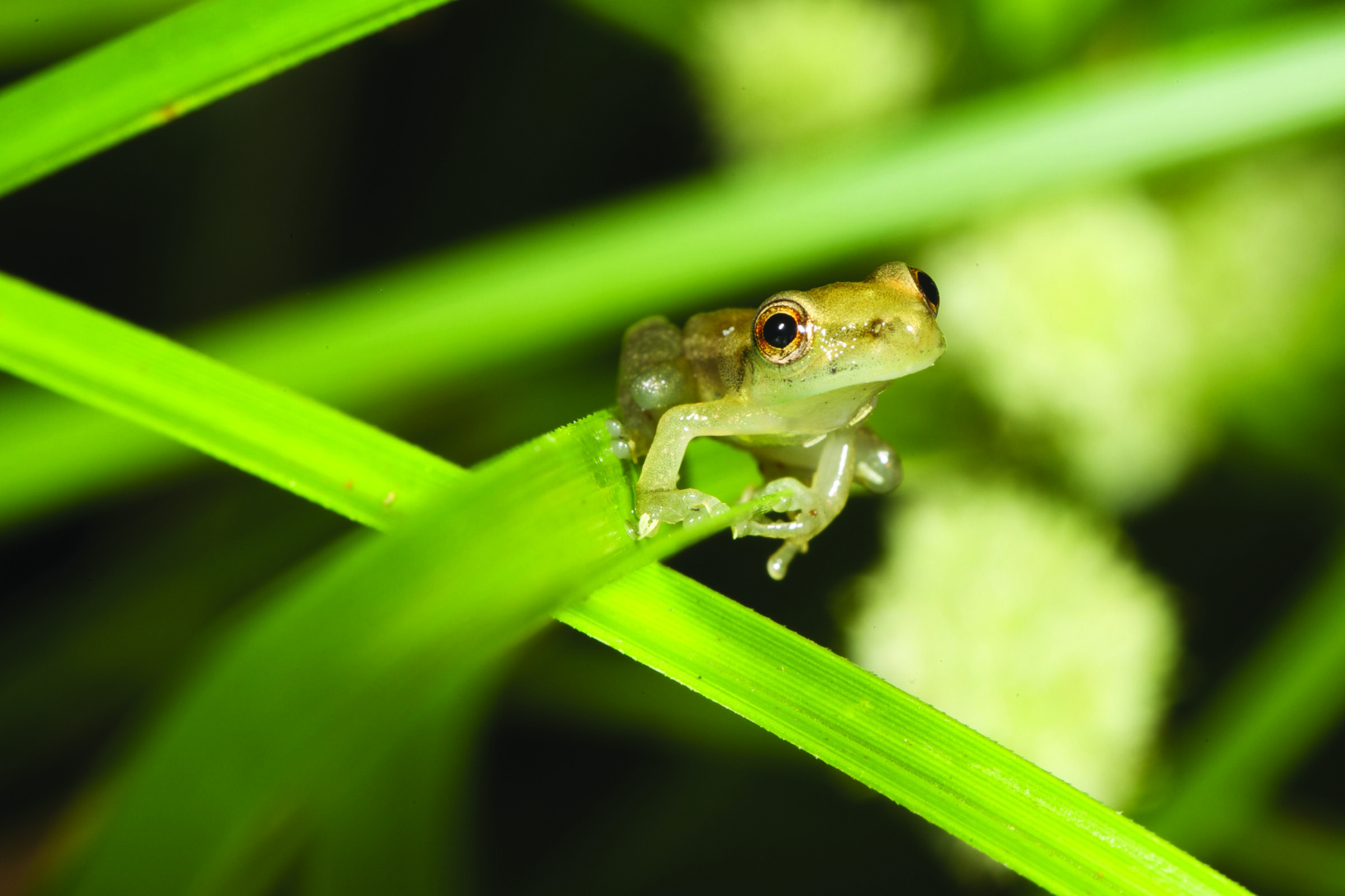 biodiversité hylode
